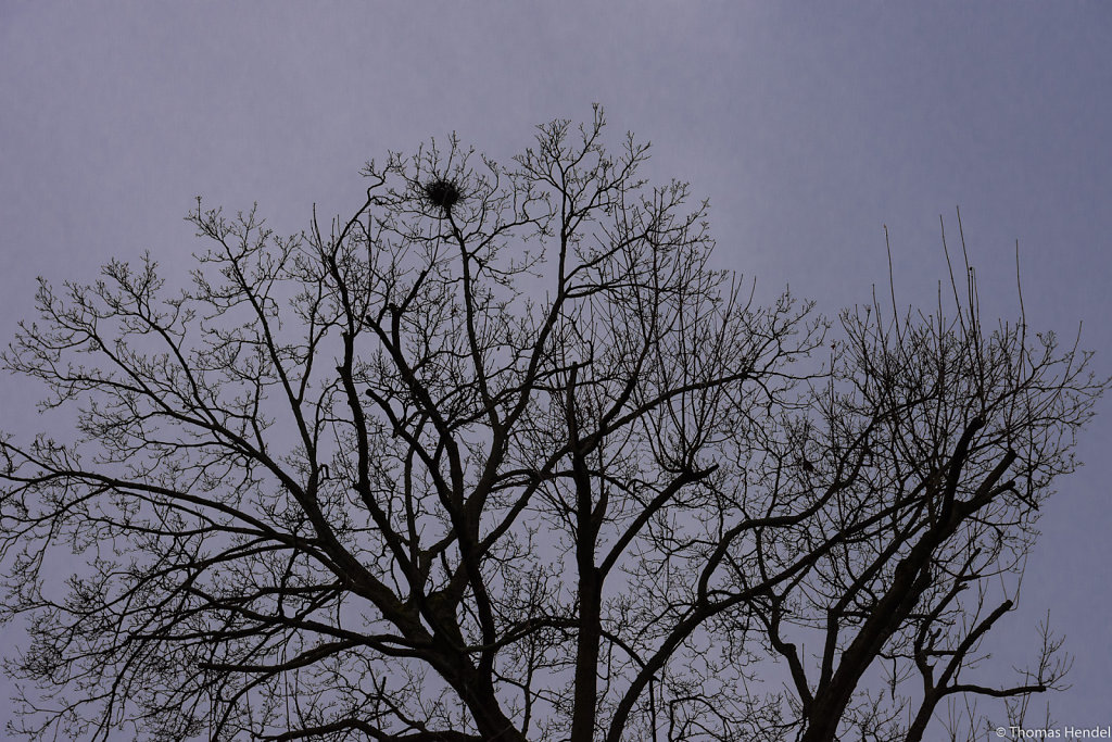 Crow's nest.