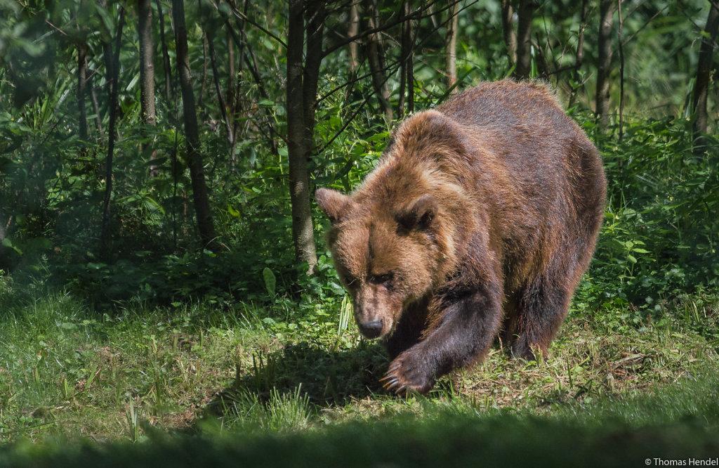 Susi, the bear.