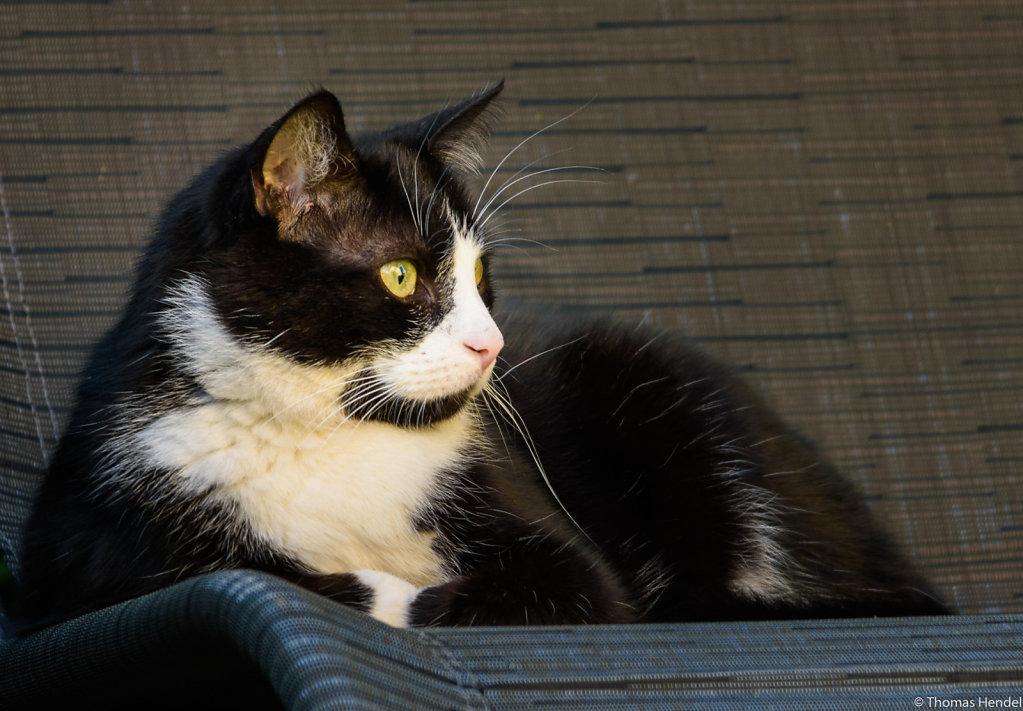 Chilling cat.